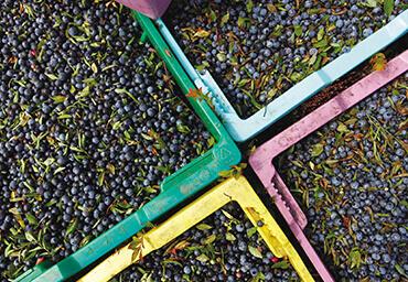 debert_communityimages_370x256_0004_Wild Blueberries_Tourism Nova Scotia.tif